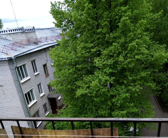 Аренда 1 к. квартиры г Петергоф, ул. Дашкевича, 9 - фото 2 из 9