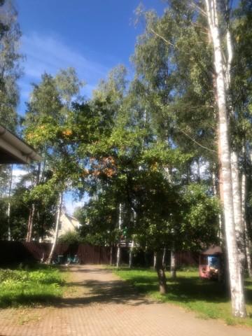 Аренда дома г Ломоносов, ул. Балтийская - фото 5 из 14